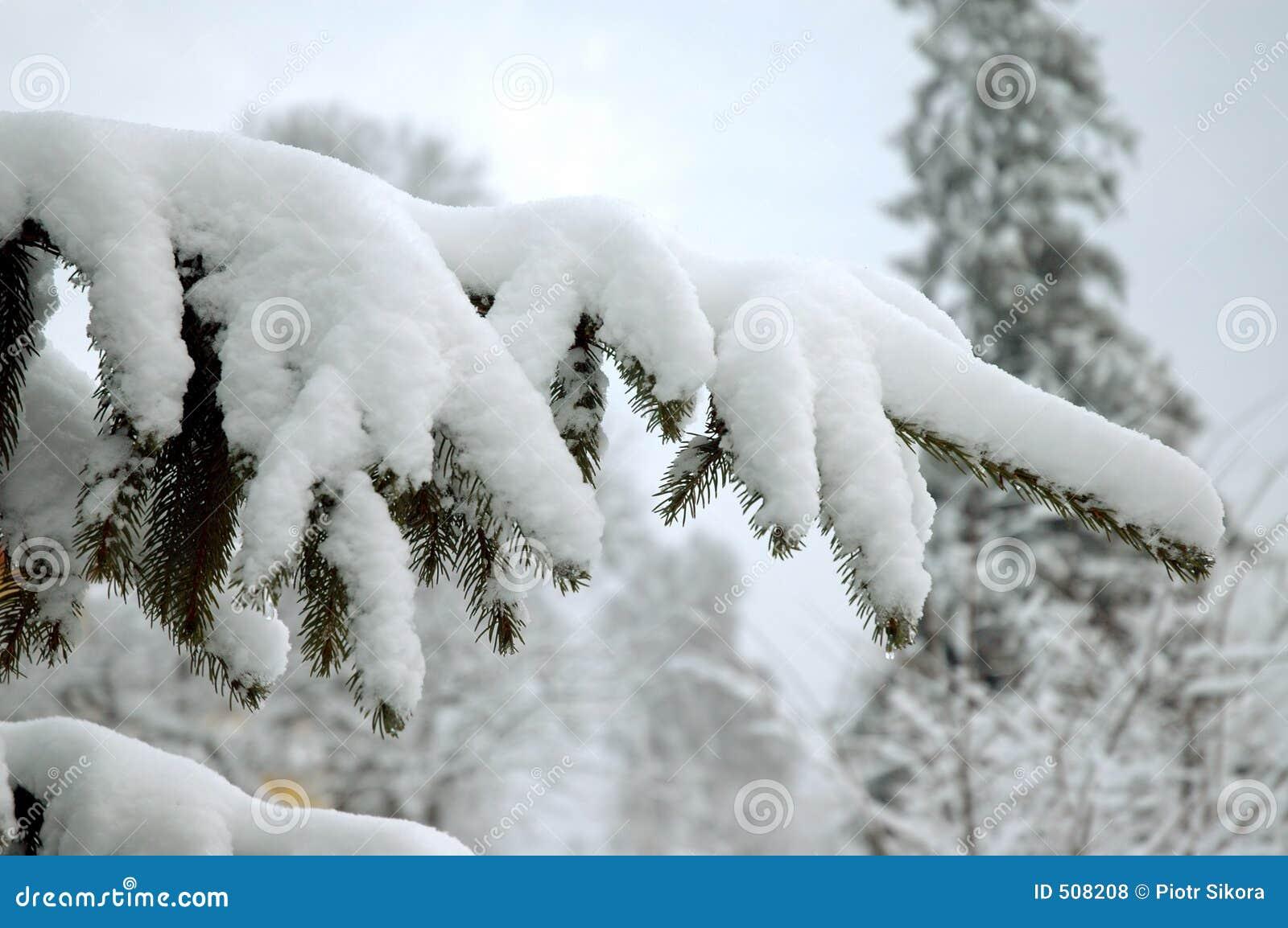 Snöig tree för filial