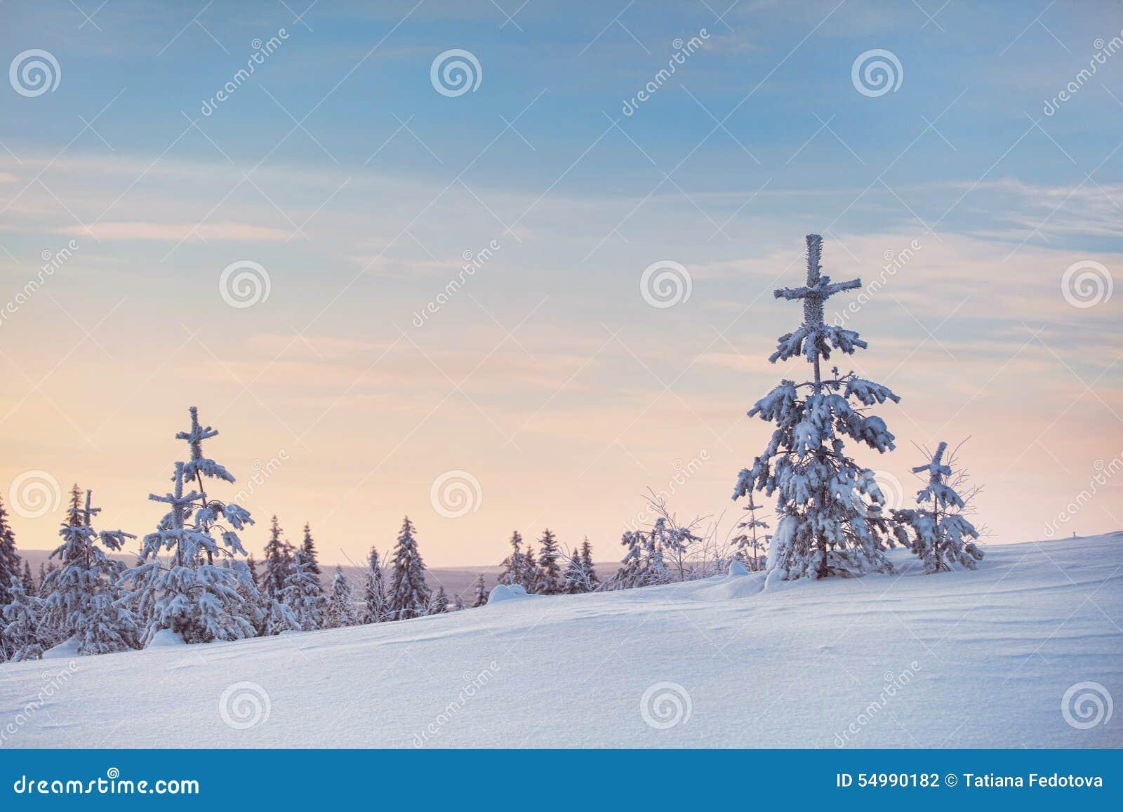 Snöig vinter och träd