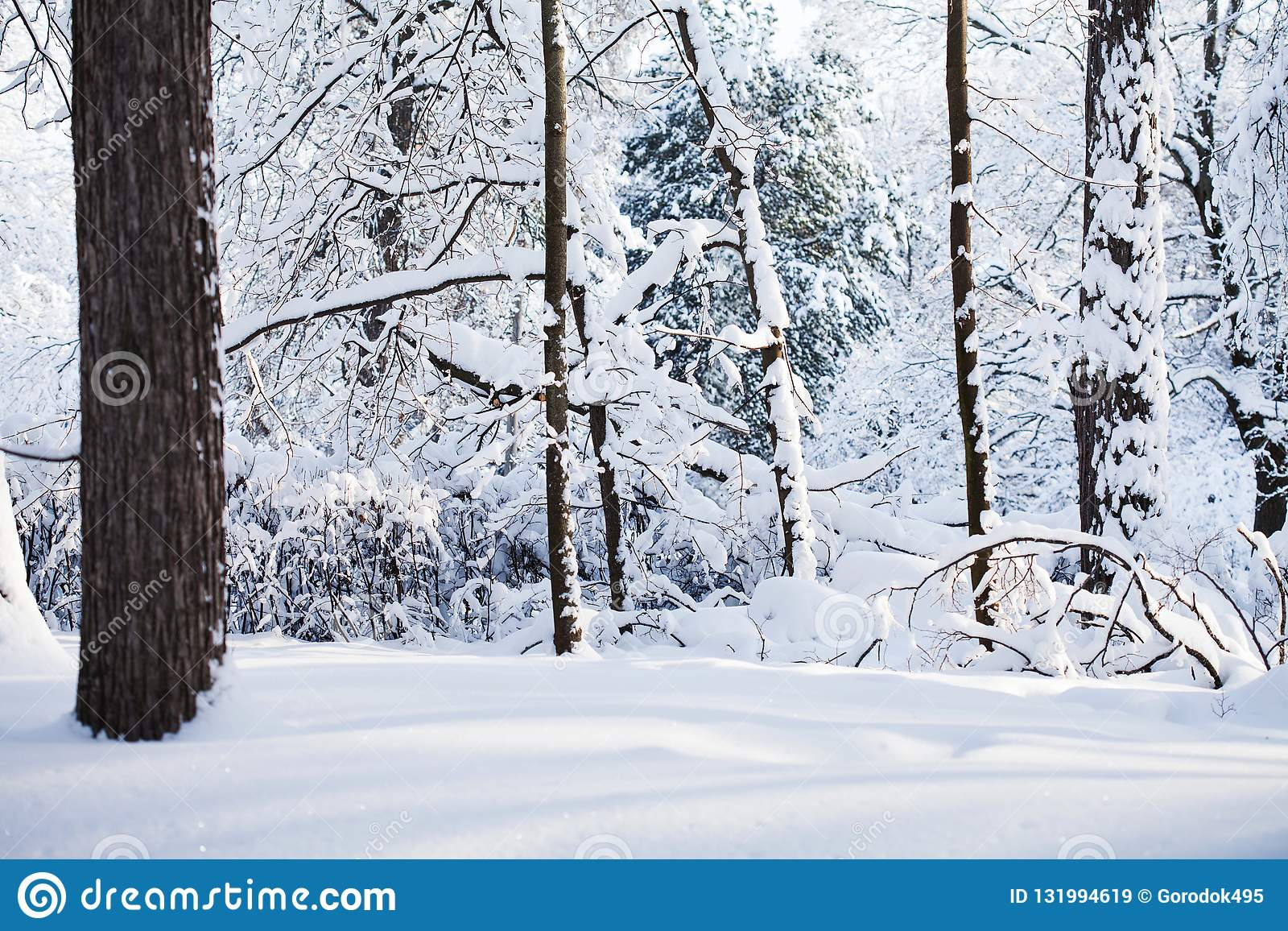 Snöig vinterskogbakgrund Platsen för kallt väder, snö täckte trädlandskap