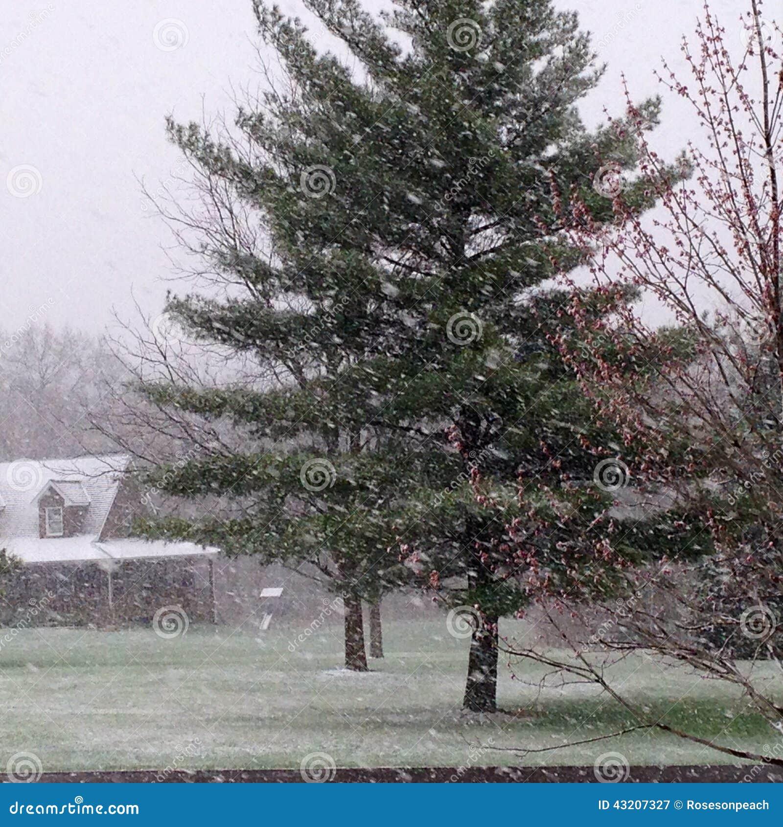 Download Snöstormhäftig Snöstorm På Våren Fotografering för Bildbyråer - Bild av snowstorm, gräs: 43207327