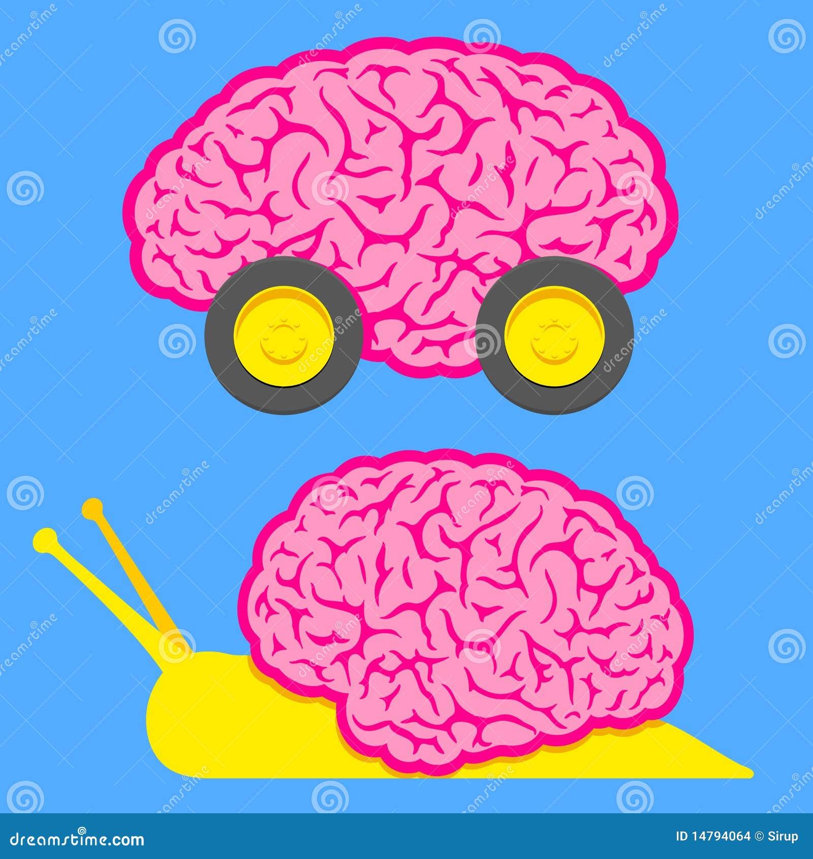 Snabba långsamma snailhjul för hjärna