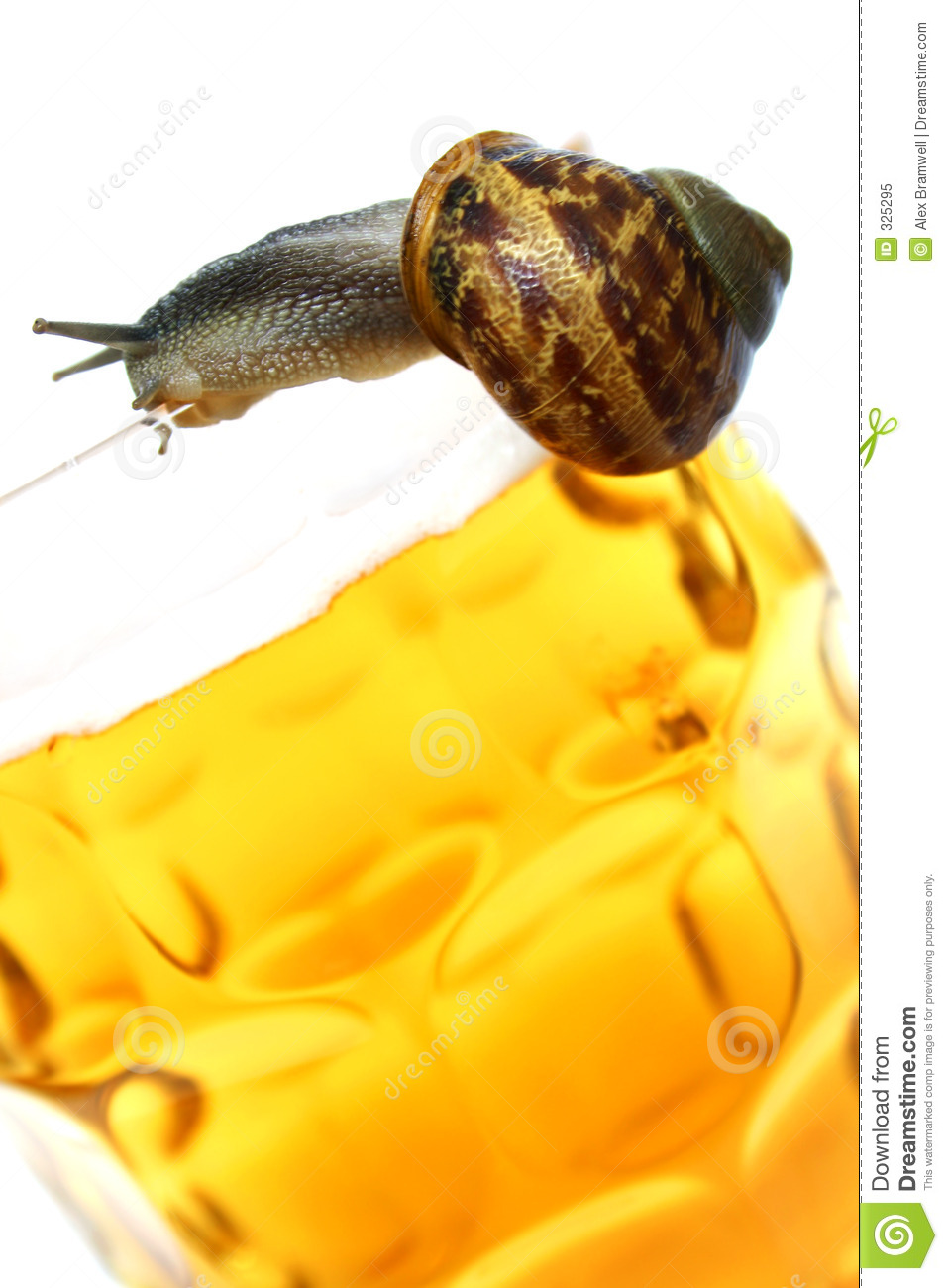 Snail on Beer