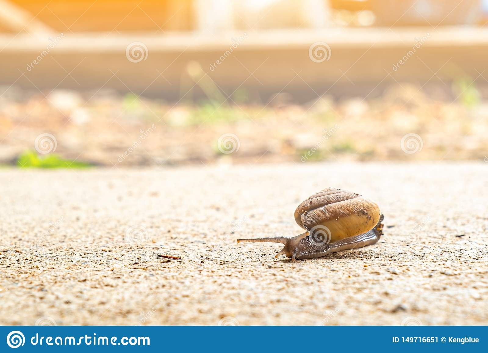 Snail crawling slowly on the rough cement floor