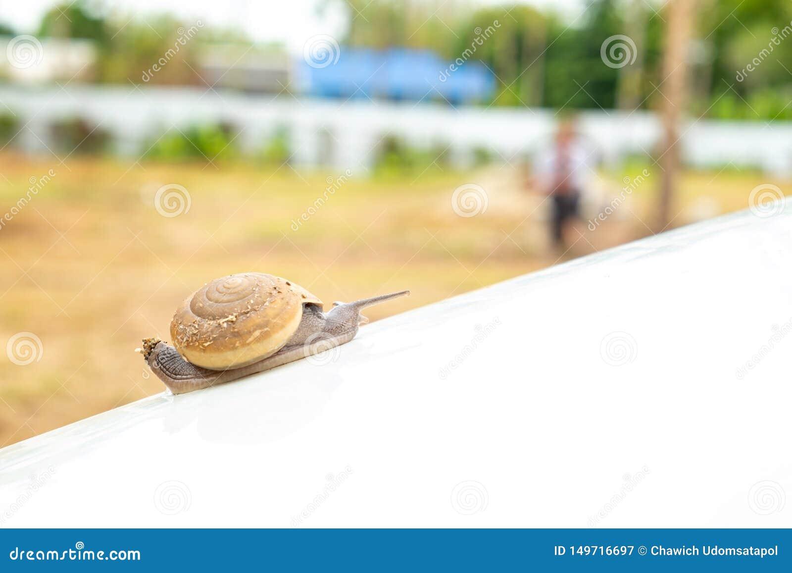 Snail crawling slowly on white bonnet
