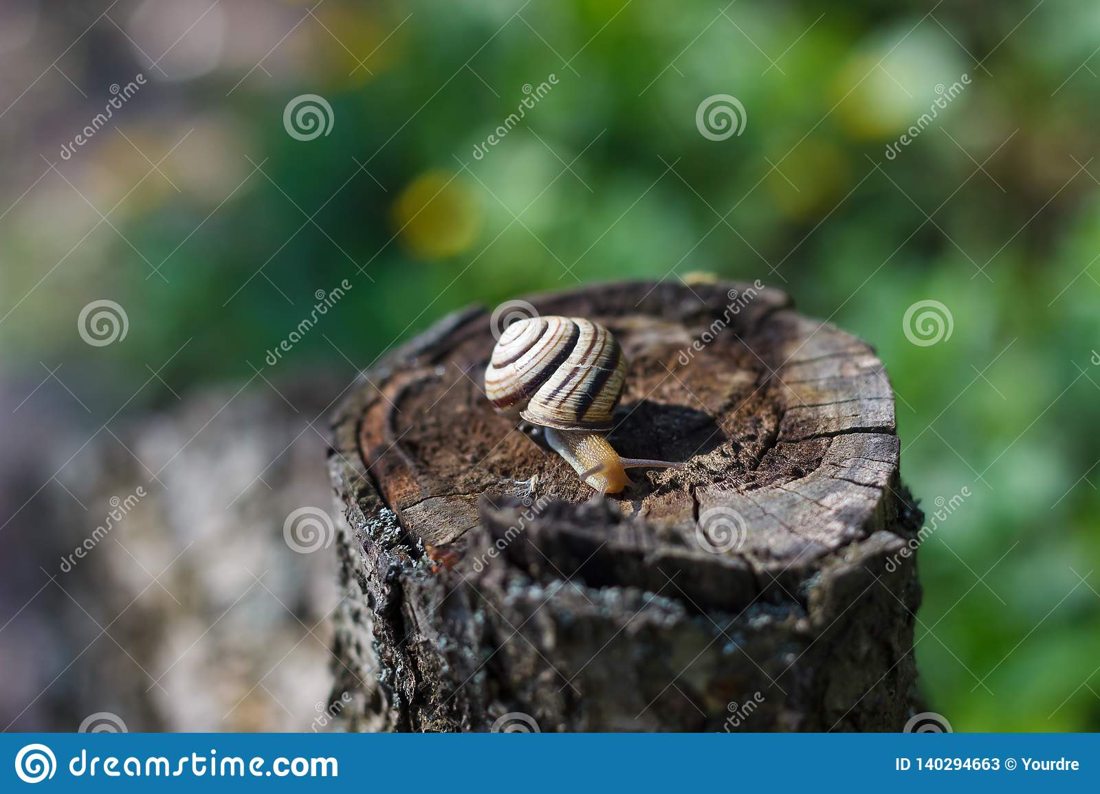 Snail crawling on a tree or bark