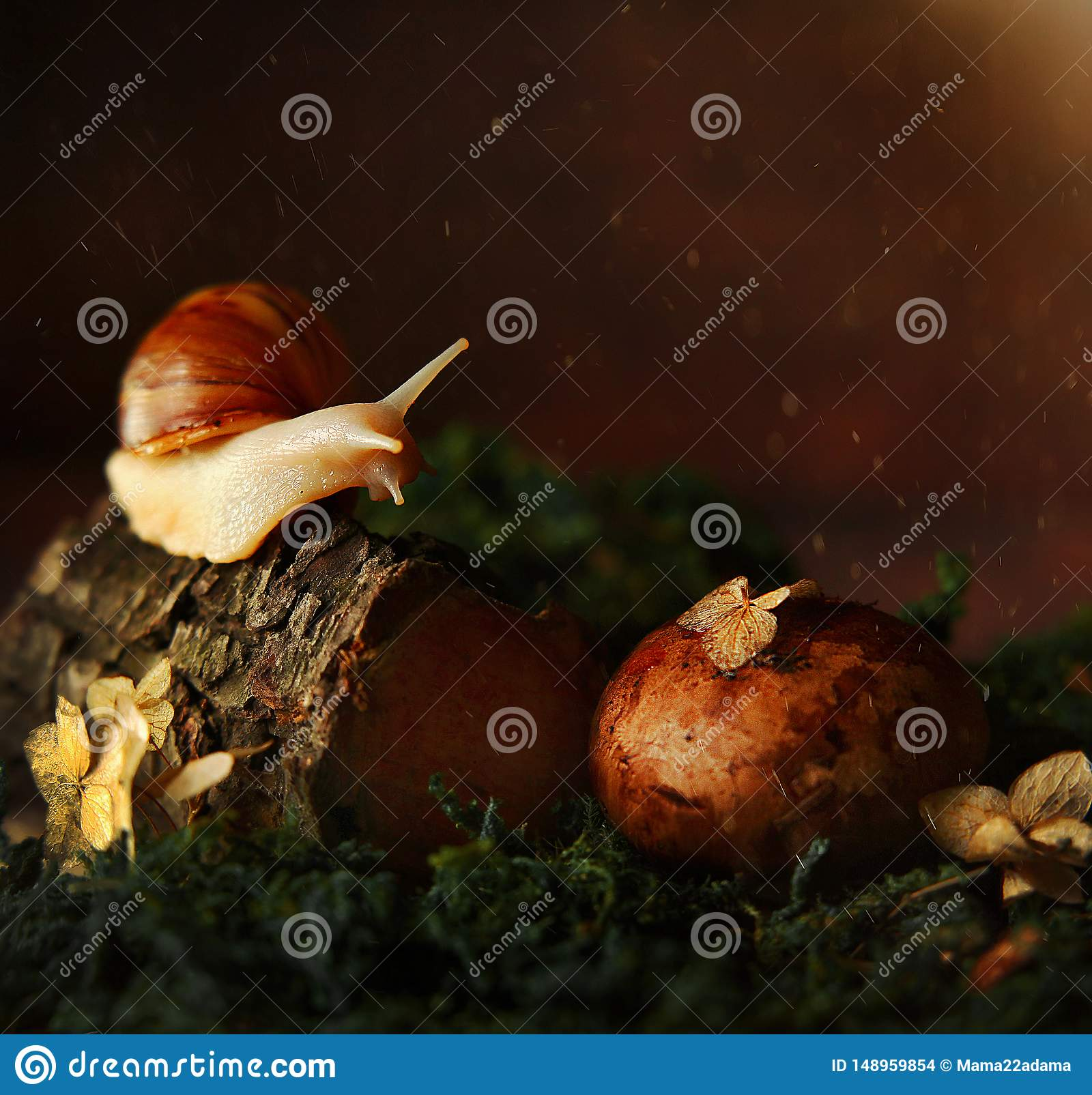 Snail in the forest on a tree