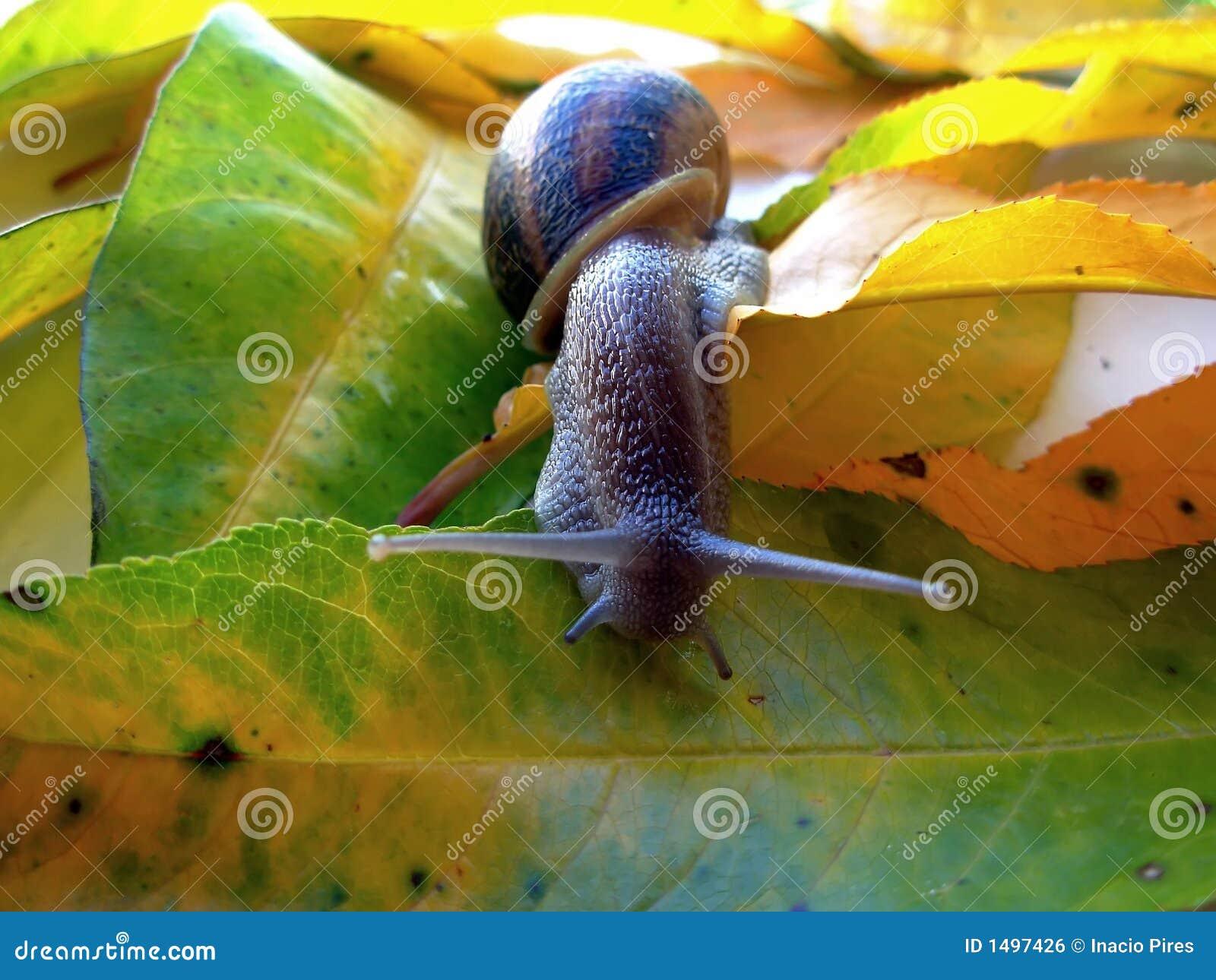 Snail in green leaf