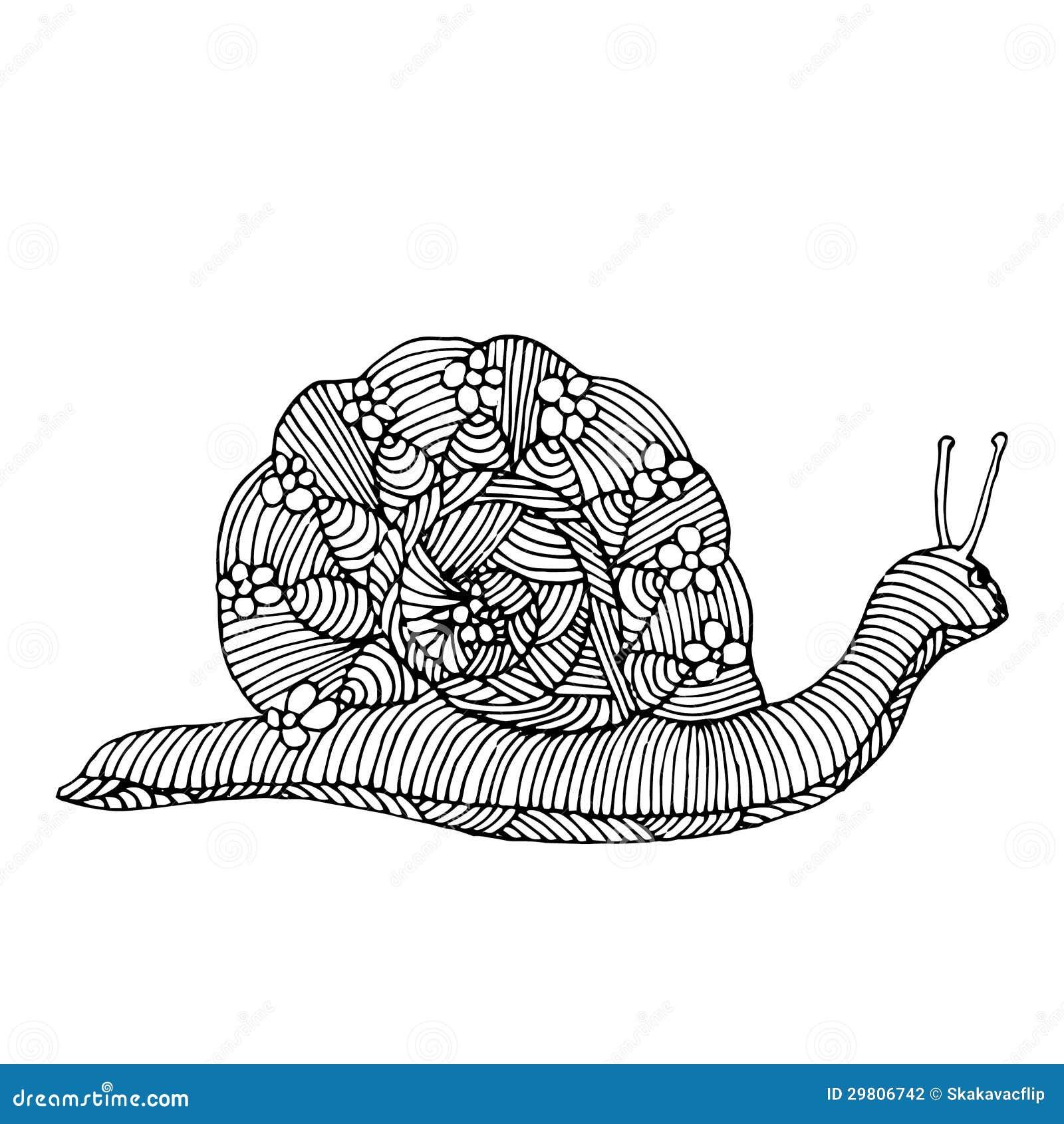 Snail Illustration Stock Photography Image 29806742