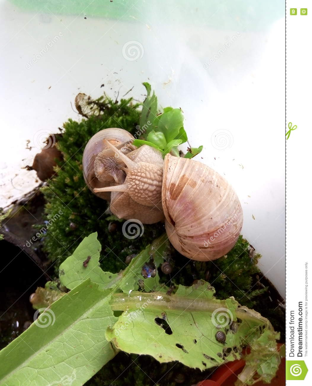 Snail Terrarium Stock Image Image Of Shell Insect Process 72642185