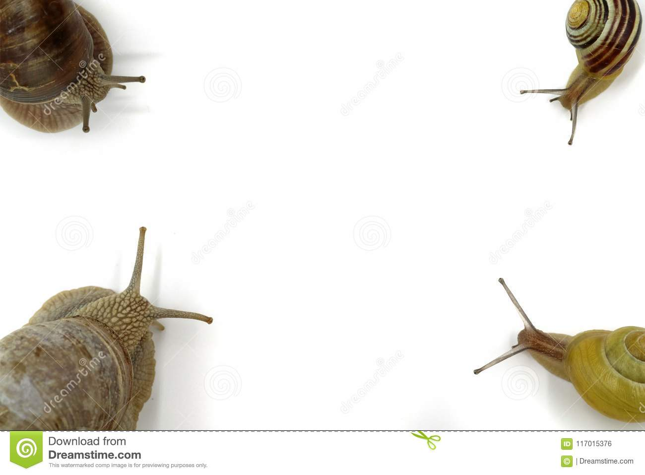 Snails in each corner top view isolated on white with copy space
