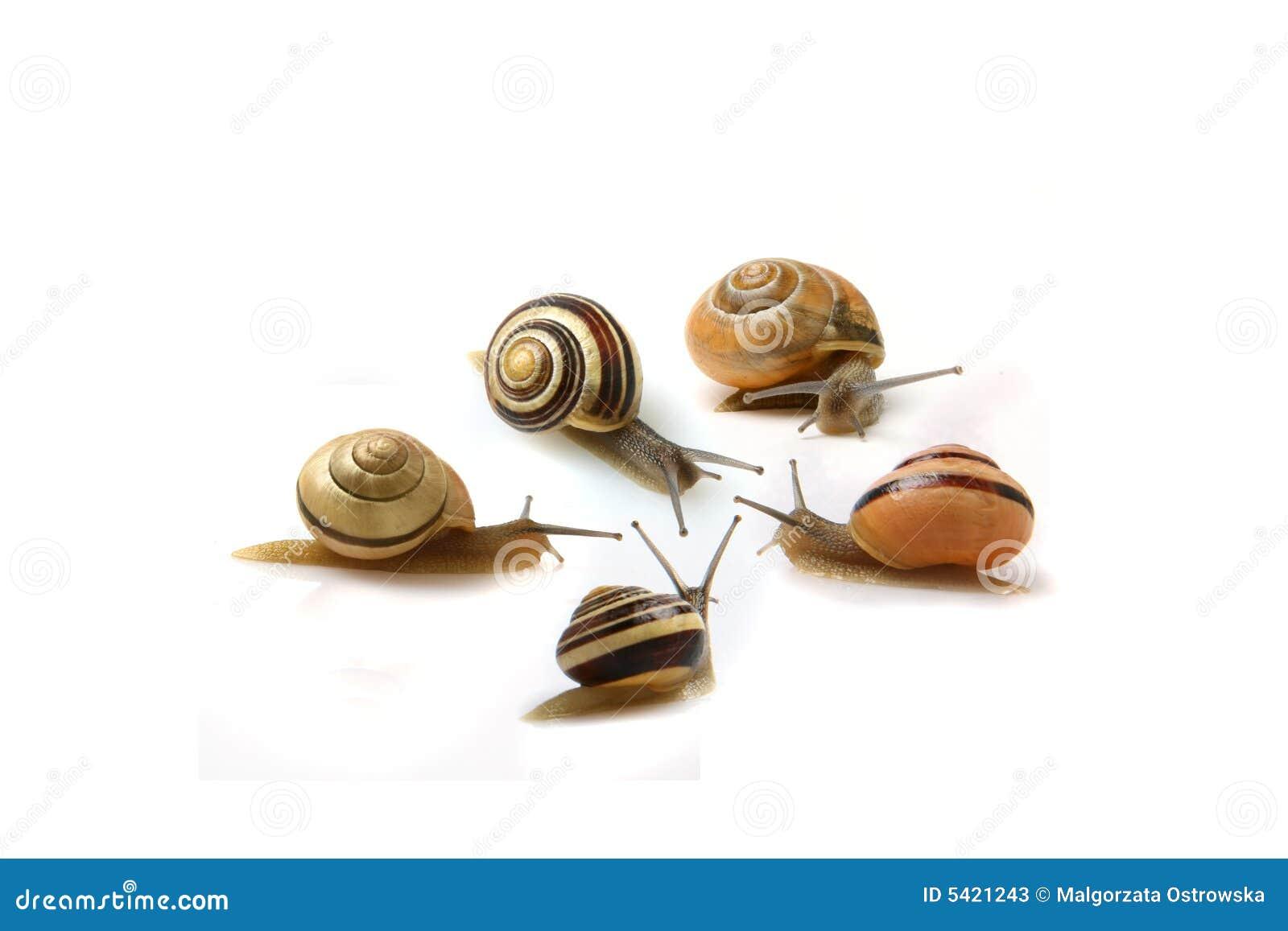 Snails meeting