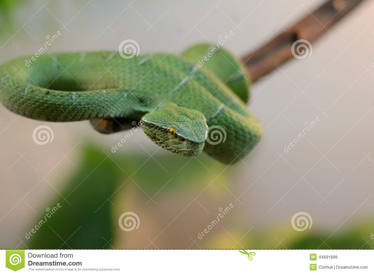 green snakes branches snake - photo #46