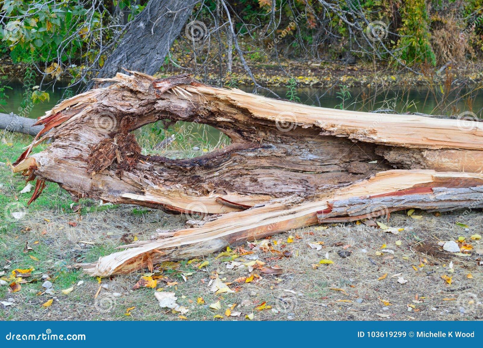 Snake-headed log on the Boise Greenbelt