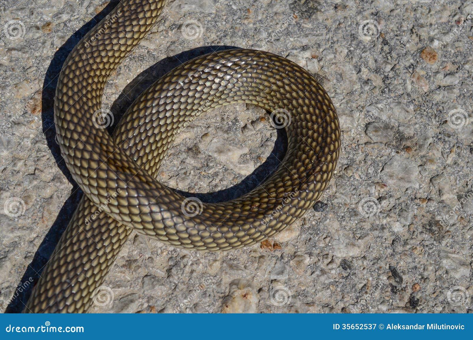 Greek Letter For Snake
