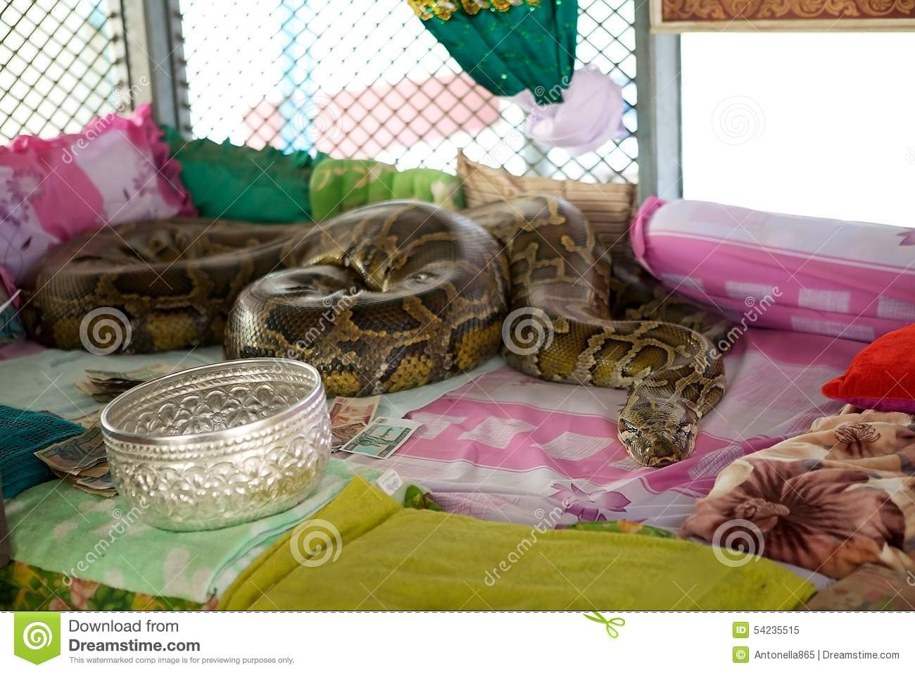 Snake pagoda stock image image of indoor ancient python for What is considered antique