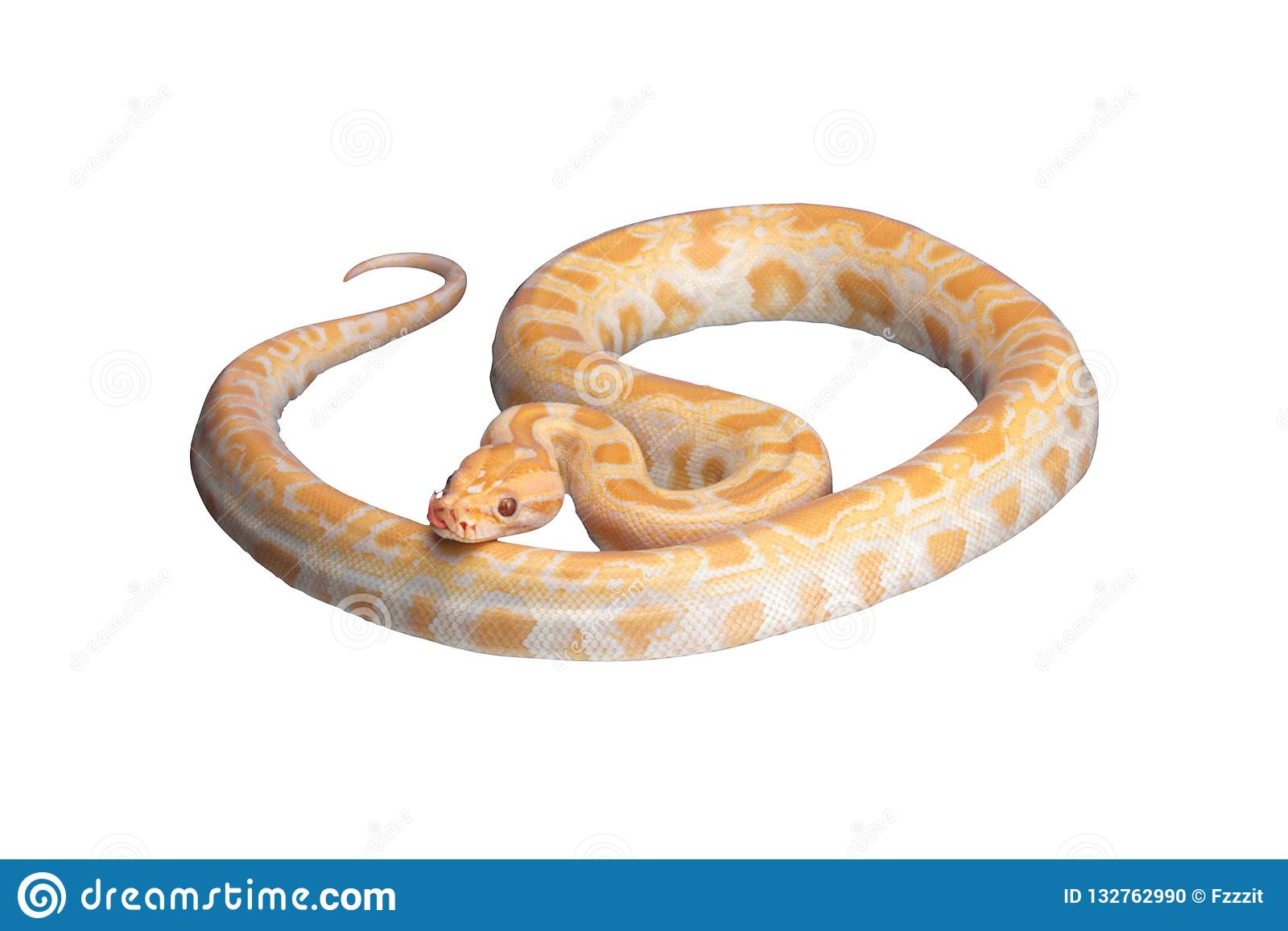 Snake Png Photos Free Royalty Free Stock Photos From Dreamstime Over 473 snakes png images are found on vippng. https www dreamstime com snake png transparent background orange format quality x image132762990