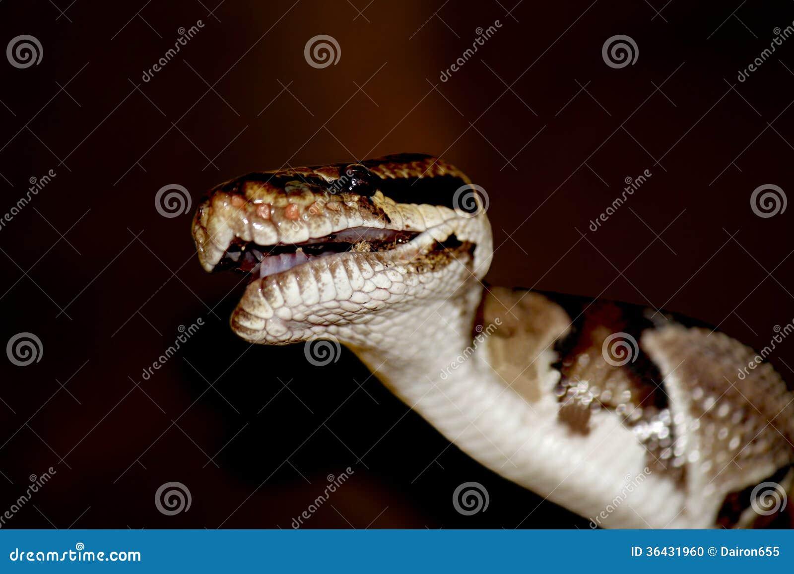 python programmiersprache download