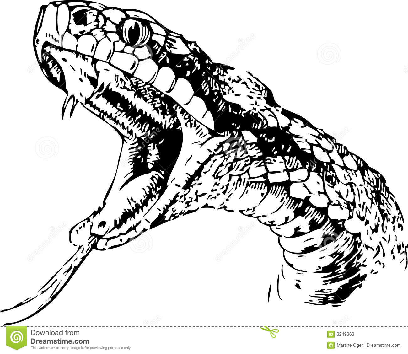 Snake Sketch Stock Photos Image 3249363