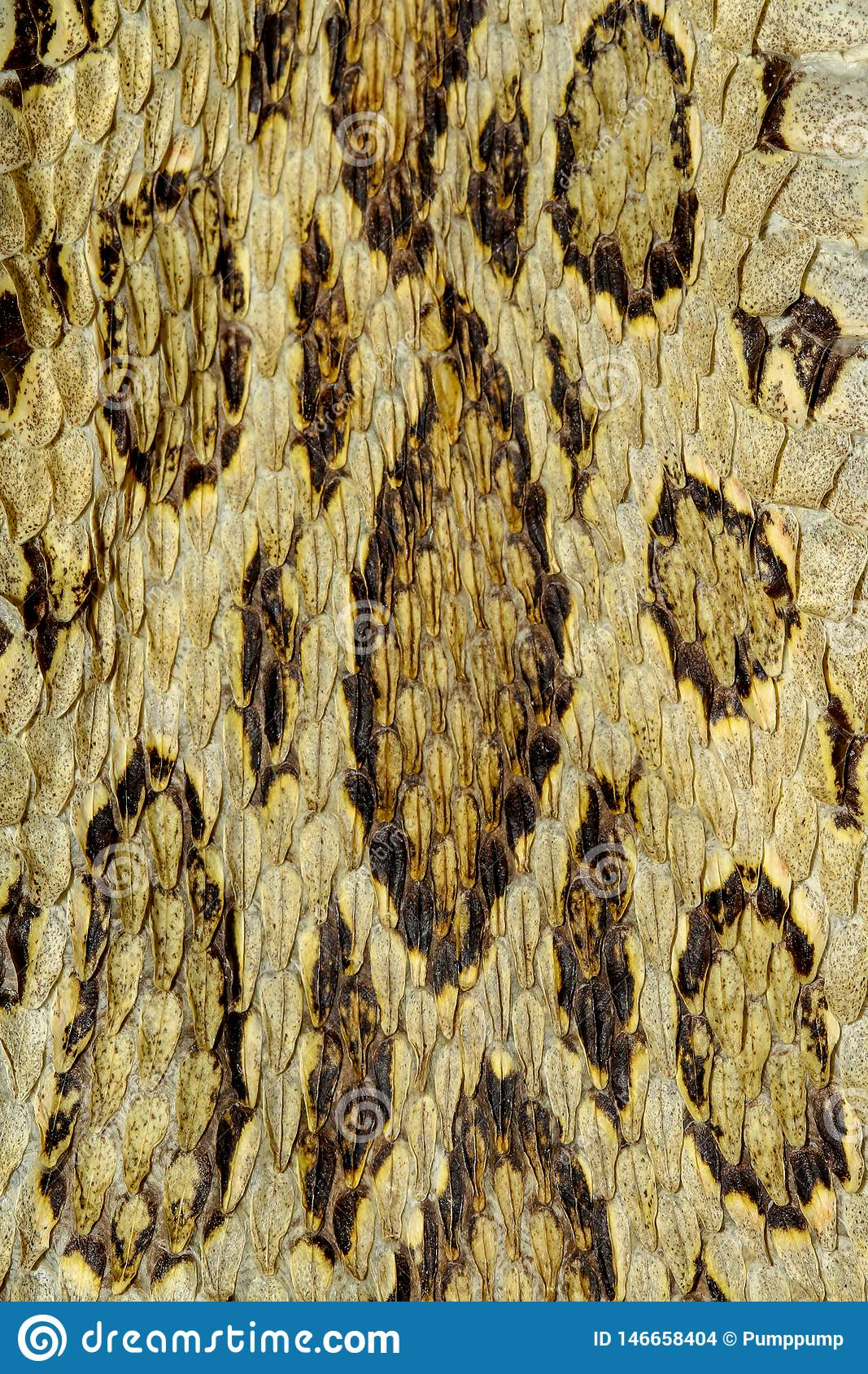 Snake Skin Reptile For Pattern Stock Photo Image Of