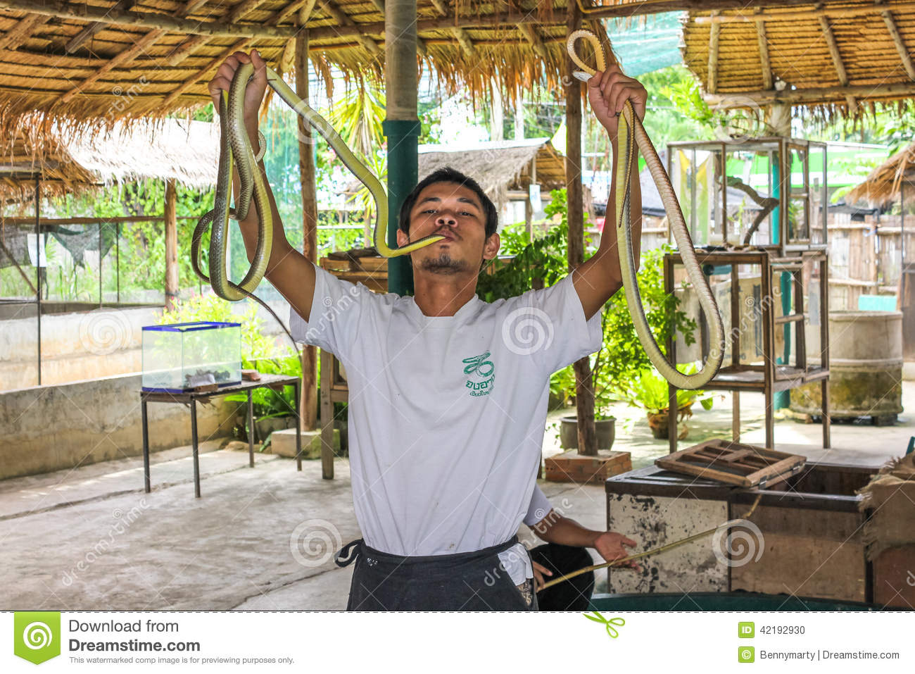 Snake Show Editorial Image Image Of Asian Trainer Thailand 42192930