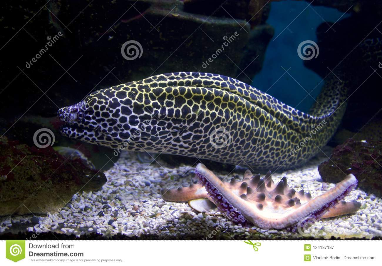 Snake wire mesh, fish predator tropical coral reefs aggressive threat toothy