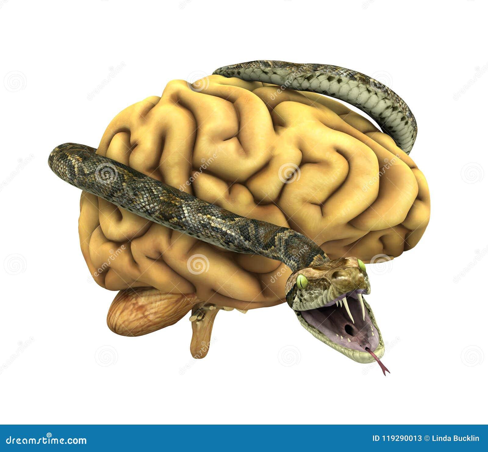 Snake Wrapped Around A Brain Stock Illustration - Illustration of ...