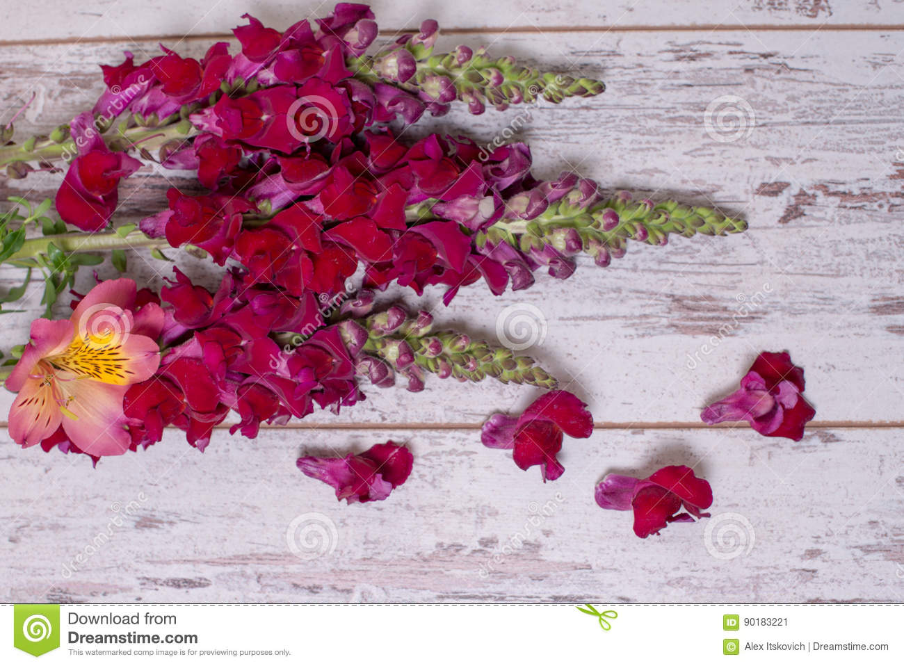 Snapdragon Flowers Bouquet Arranged On Wooden Background Stock Image