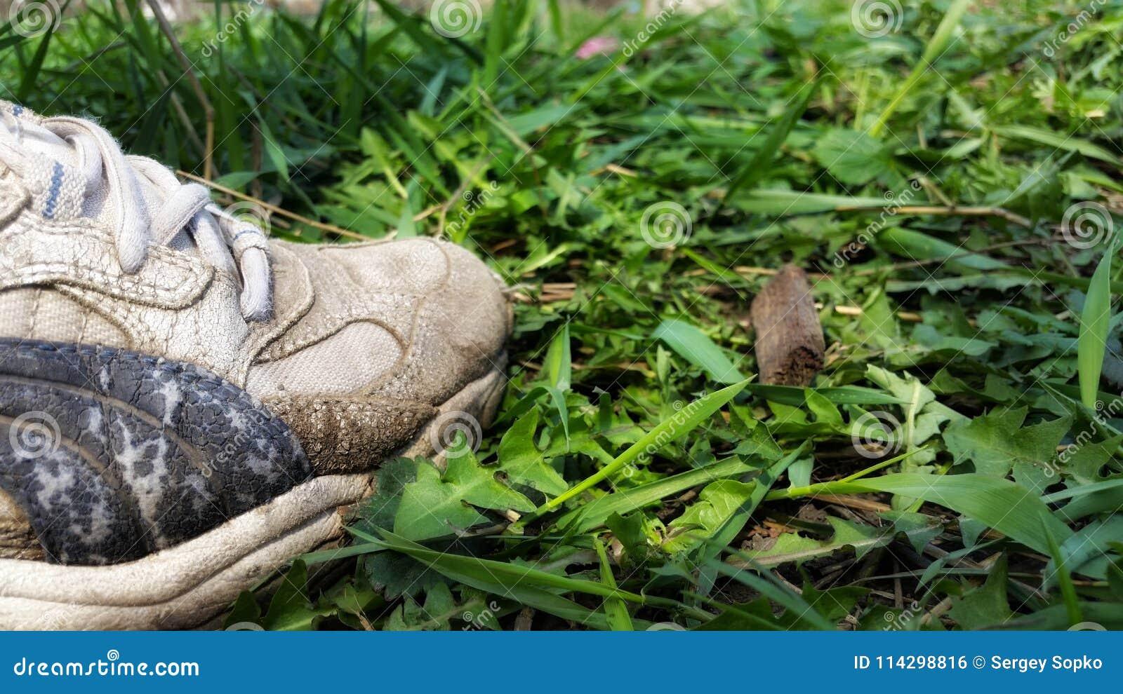 Sneakers na trawie