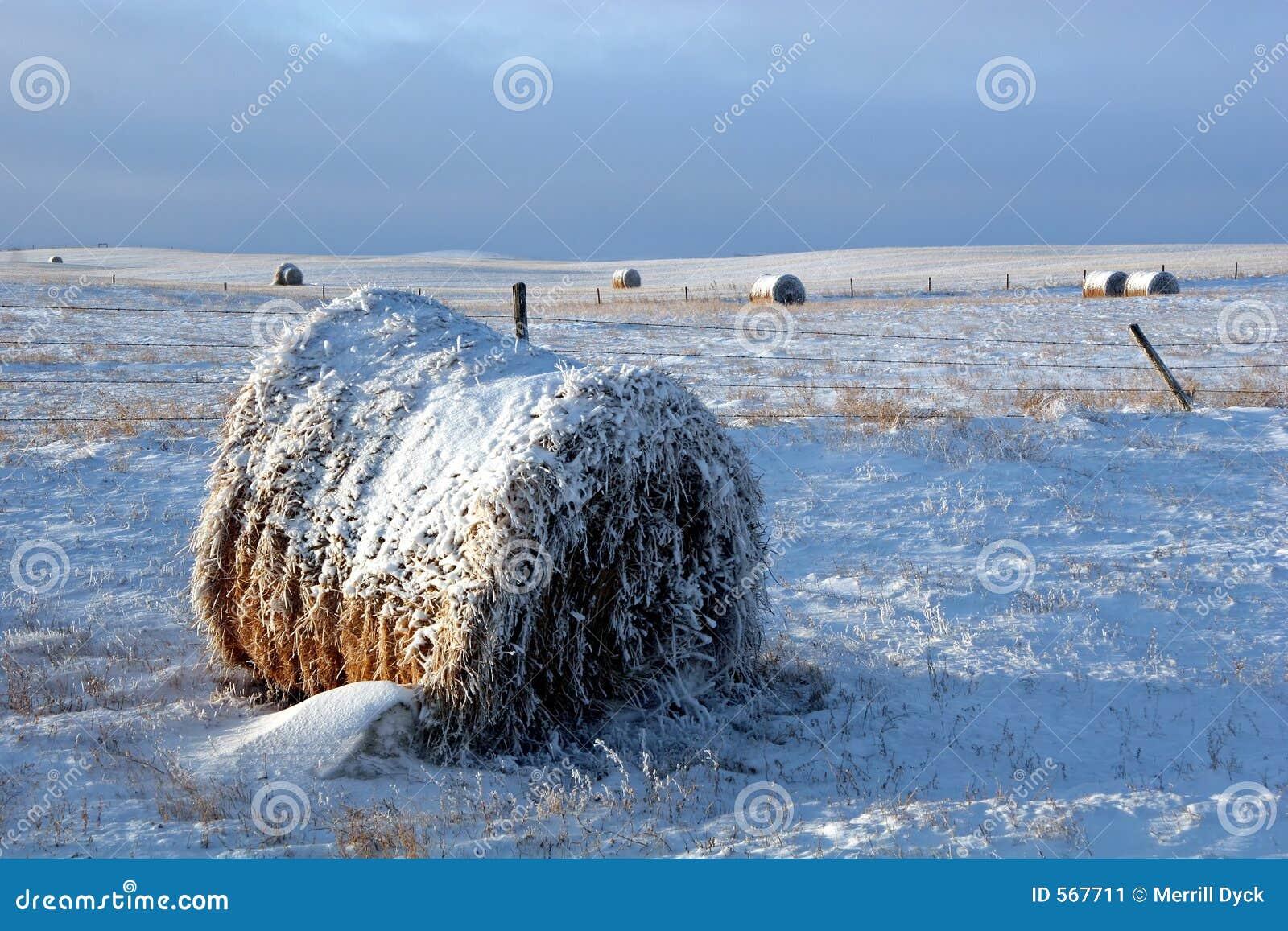 Sneeuw Behandelde Baal op Gebied