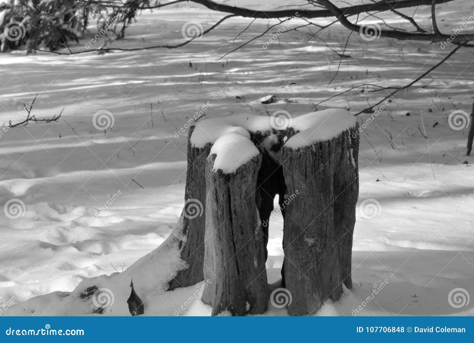 Download Sneeuw Behandelde Stomp Met Gat Stock Foto - Afbeelding bestaande uit koude, besnoeiing: 107706848