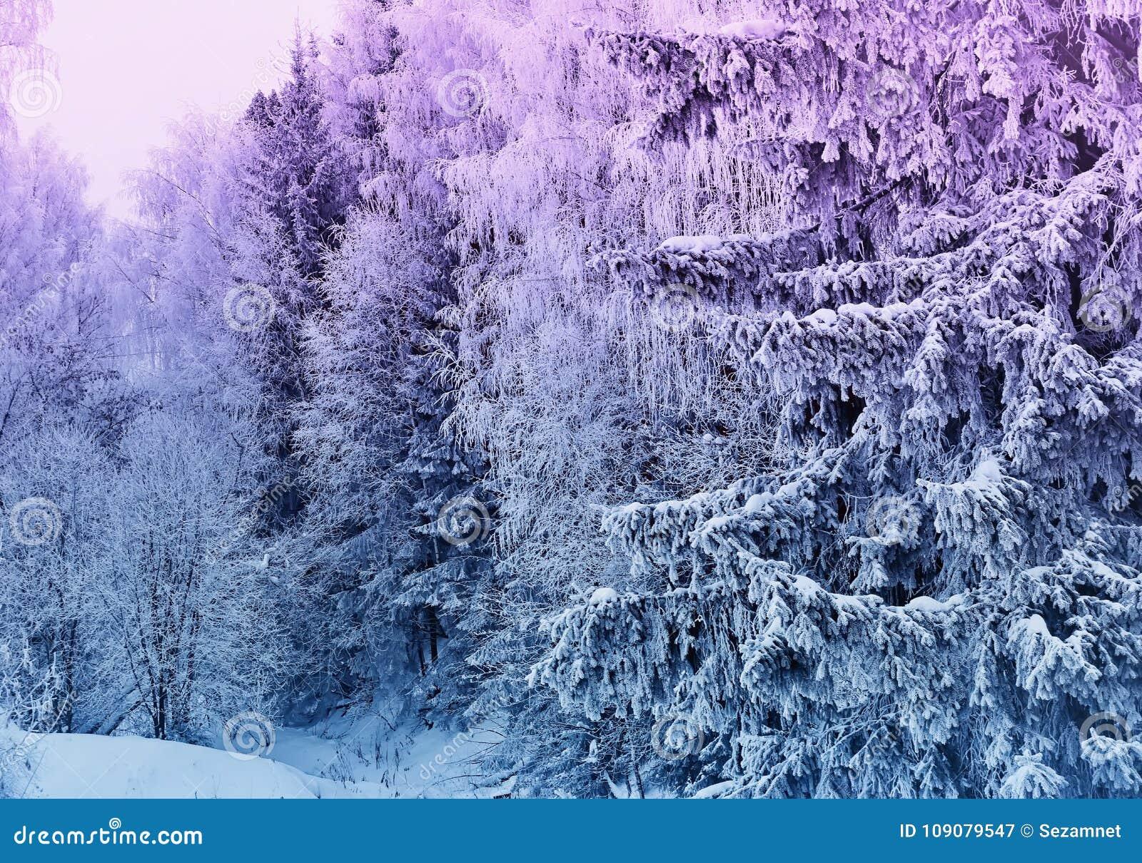 Sneeuw de bomen mooie zonsondergang fantasievol ijzig RT van het de winterlandschap