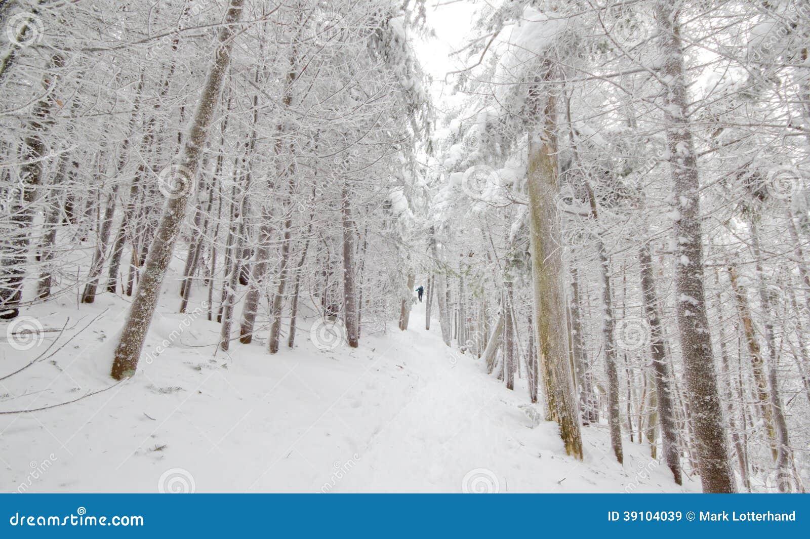 Sneeuw Geladen Sleep
