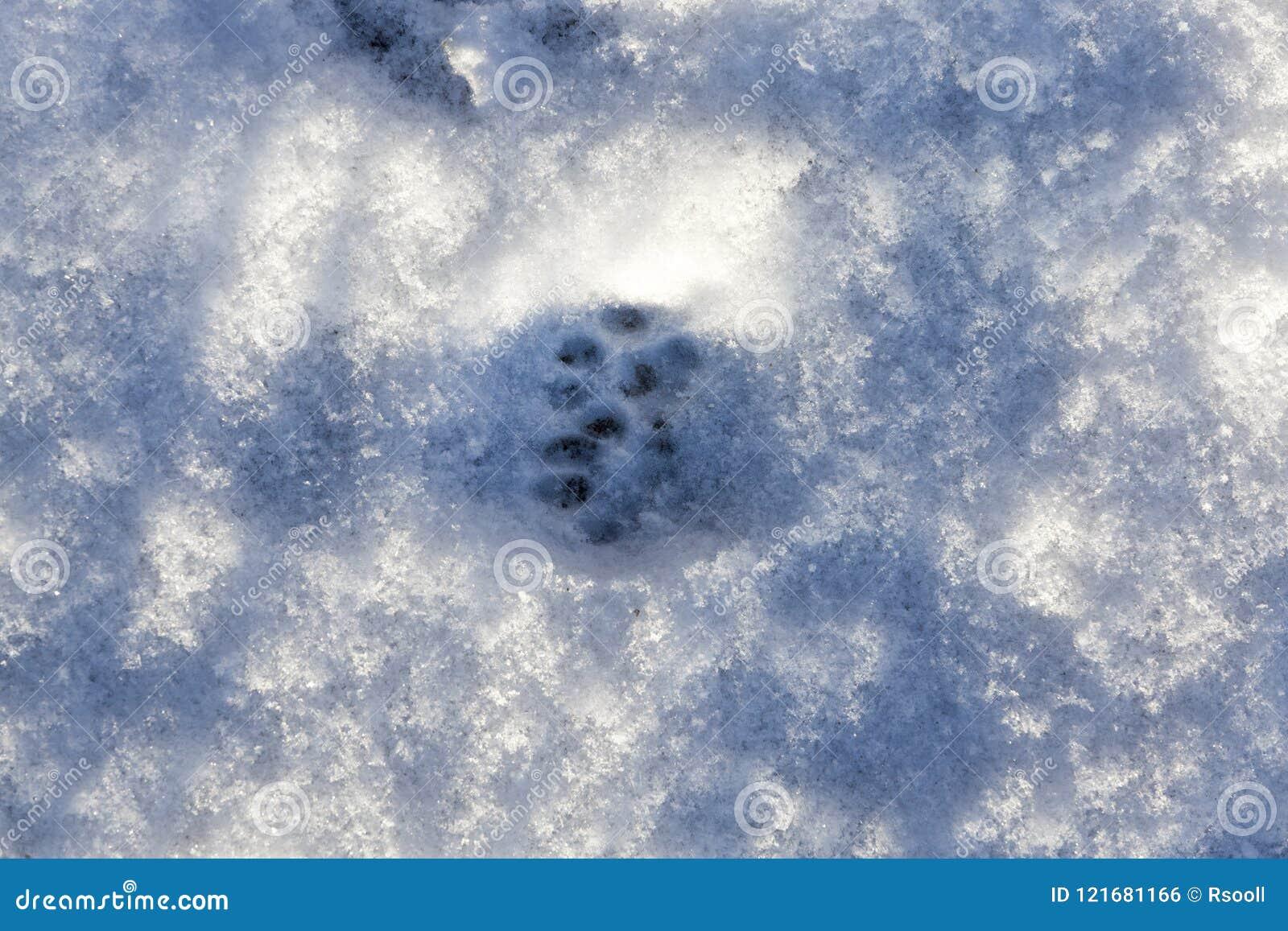 Sneeuw na sneeuwval