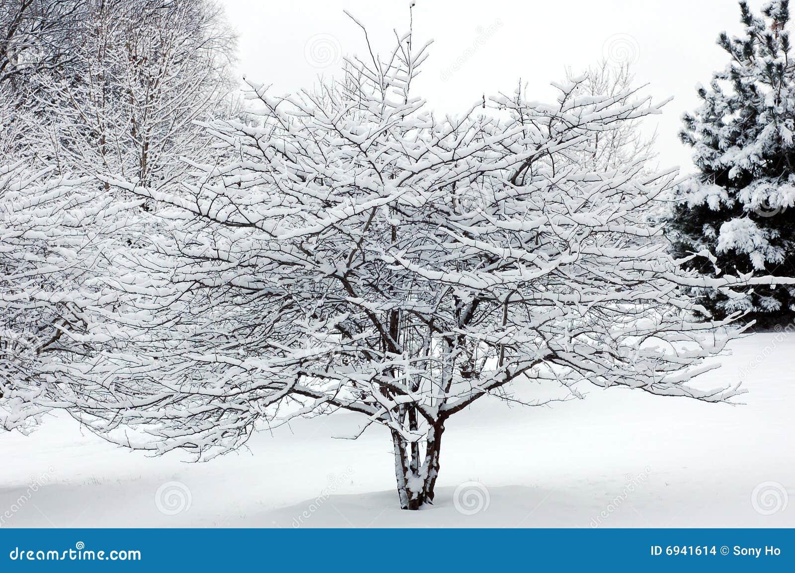 Sneeuw op boom