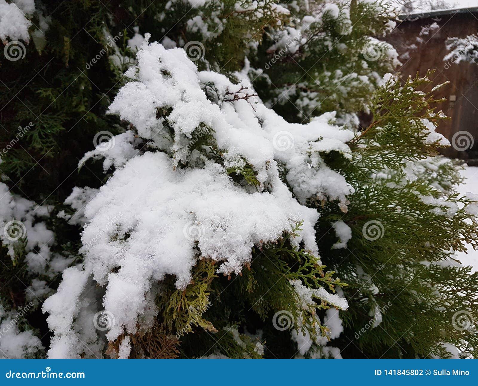 Sneeuw op de bomen in de tuin van het Huis in Storkow