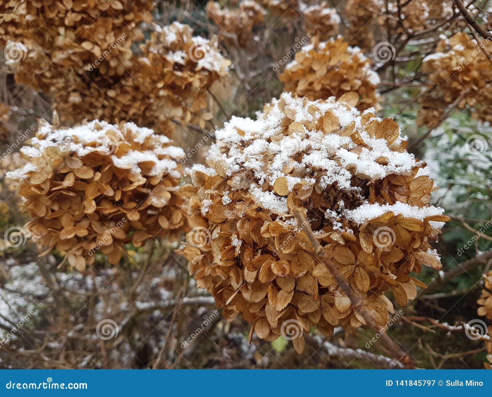 Sneeuw op de droge bladeren in de tuin
