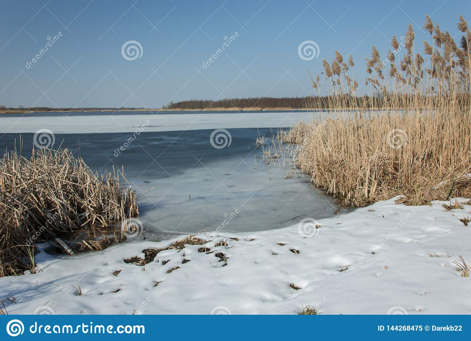 Sneeuw op de kust van een bevroren meer en een hoog riet Horizon en blauwe hemel