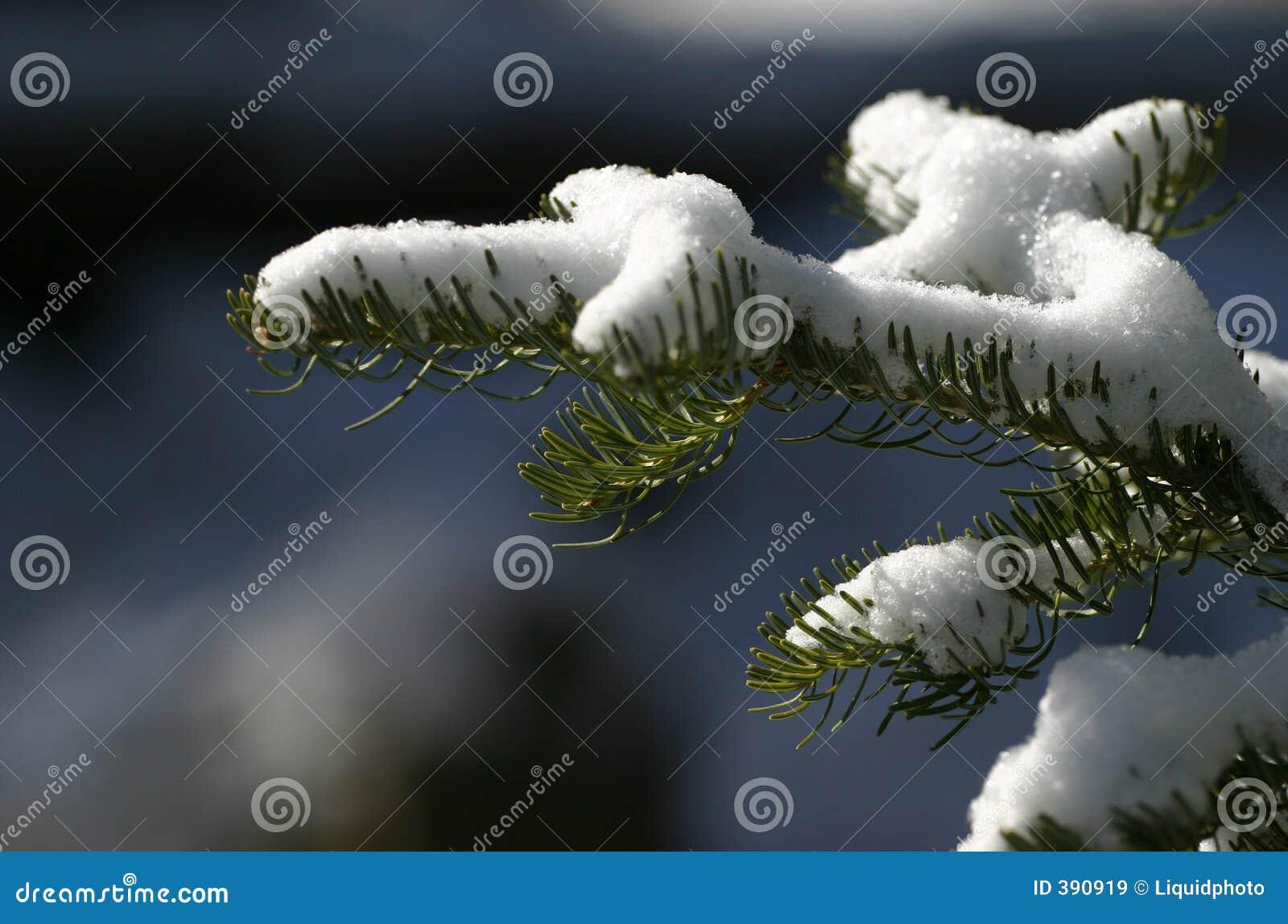 Sneeuw op de Naalden van de Pijnboom