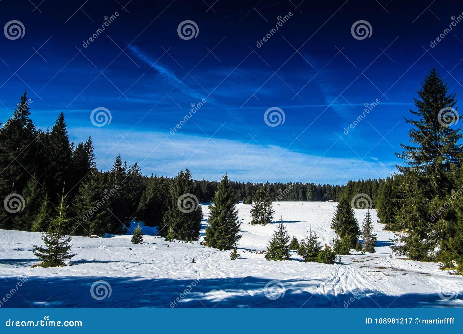 Sneeuw op een bergweide in Sumava, Tsjechische republiek