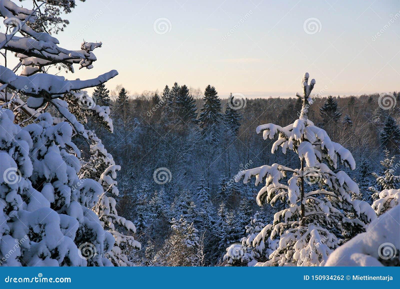 Sneeuw, zonnige en koude dag in het hout