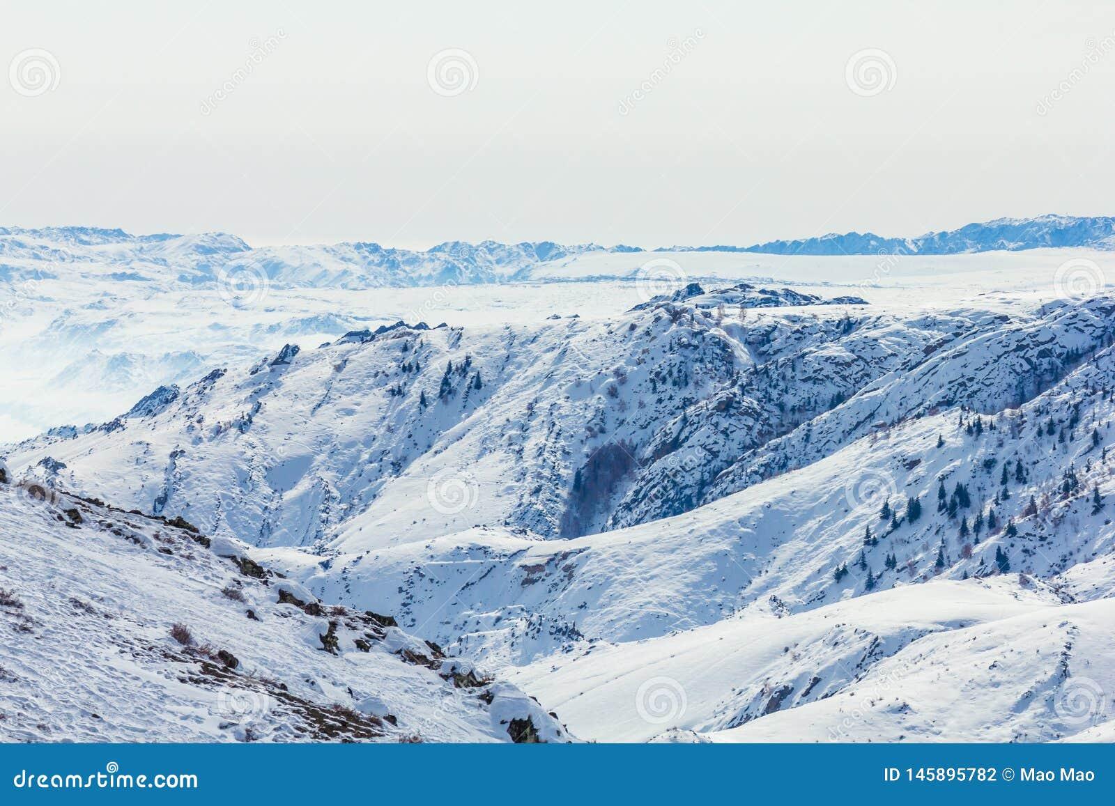Sneeuwbos in de winter Het snow-covered Gongnaisi-bos in de winter