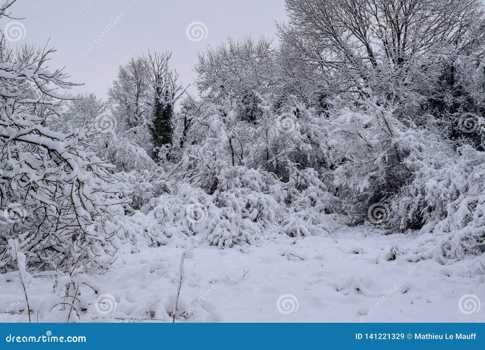 Sneeuwbos in Frans Platteland tijdens de Kerstmisseizoen/Winter