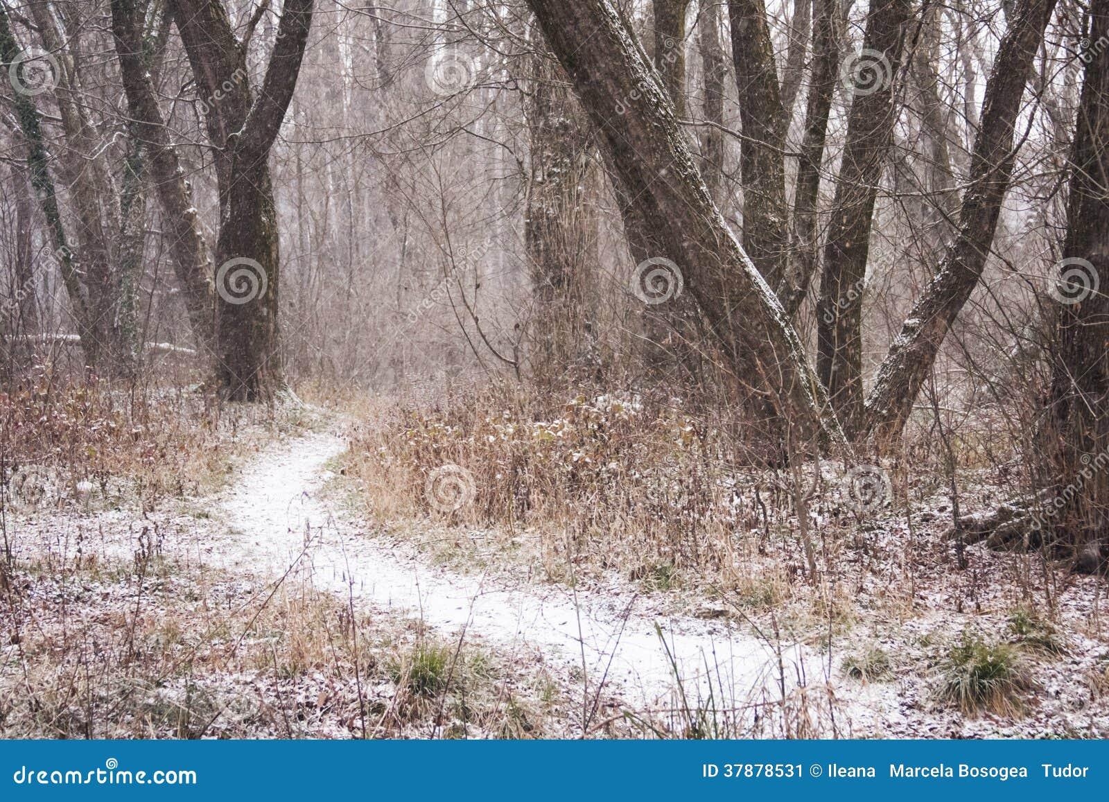 Sneeuwend landschap in het park