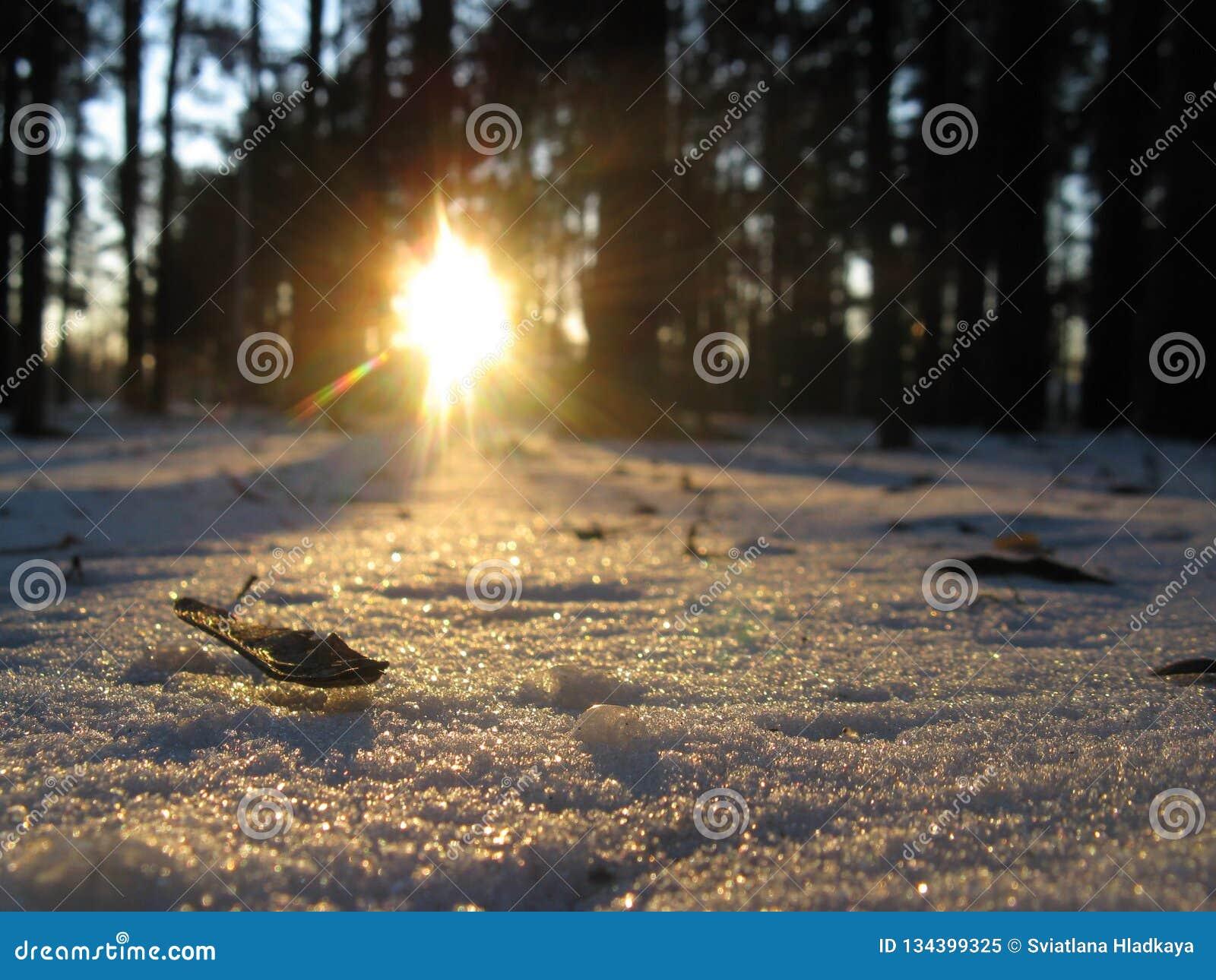 Sneeuwflikkeringen als zich het verspreiden van diamanten