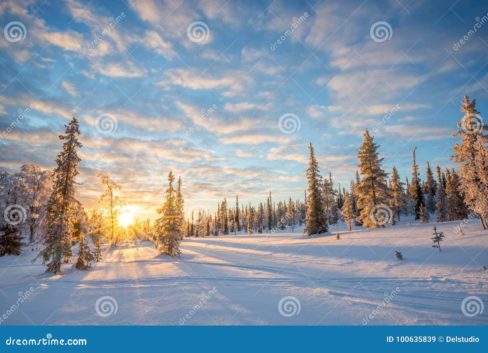 Sneeuwlandschap bij zonsondergang, bevroren bomen in de winter in Saariselka, Lapland Finland