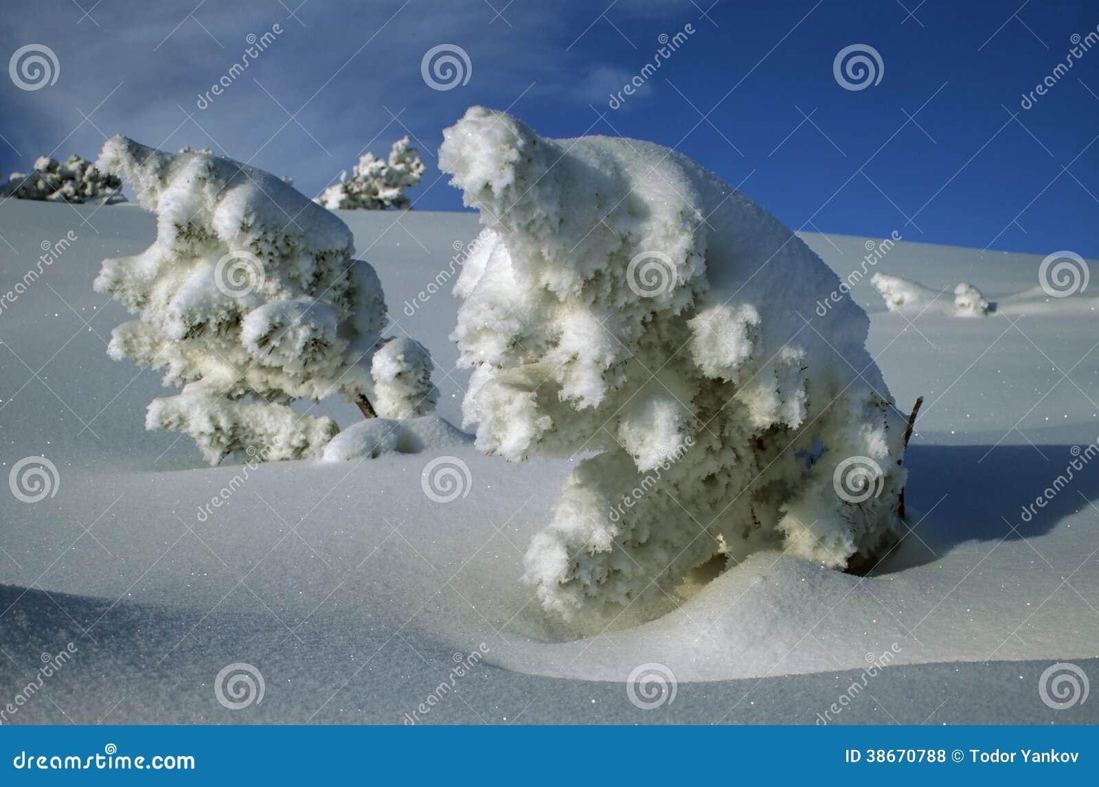 Sneeuwmannen
