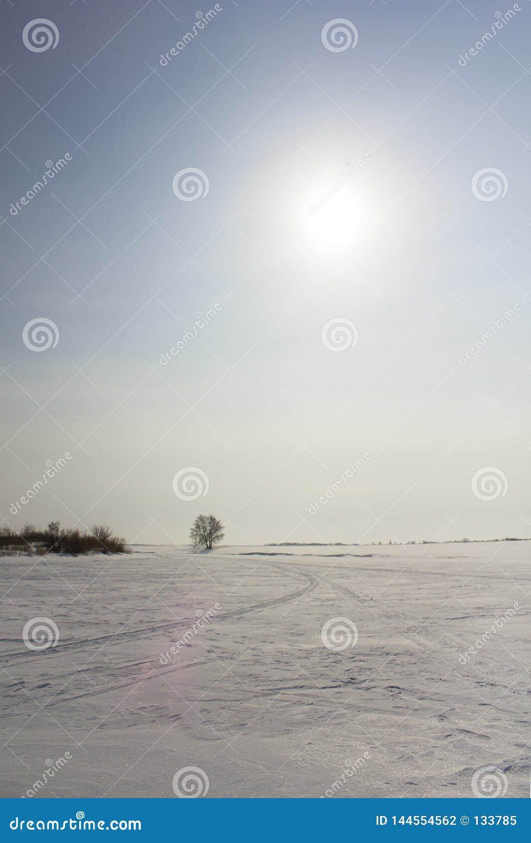 Sneeuwscootersleep in de woestijn van de de wintersneeuw met droge struik en boom onder de blauwe hemel met de zon