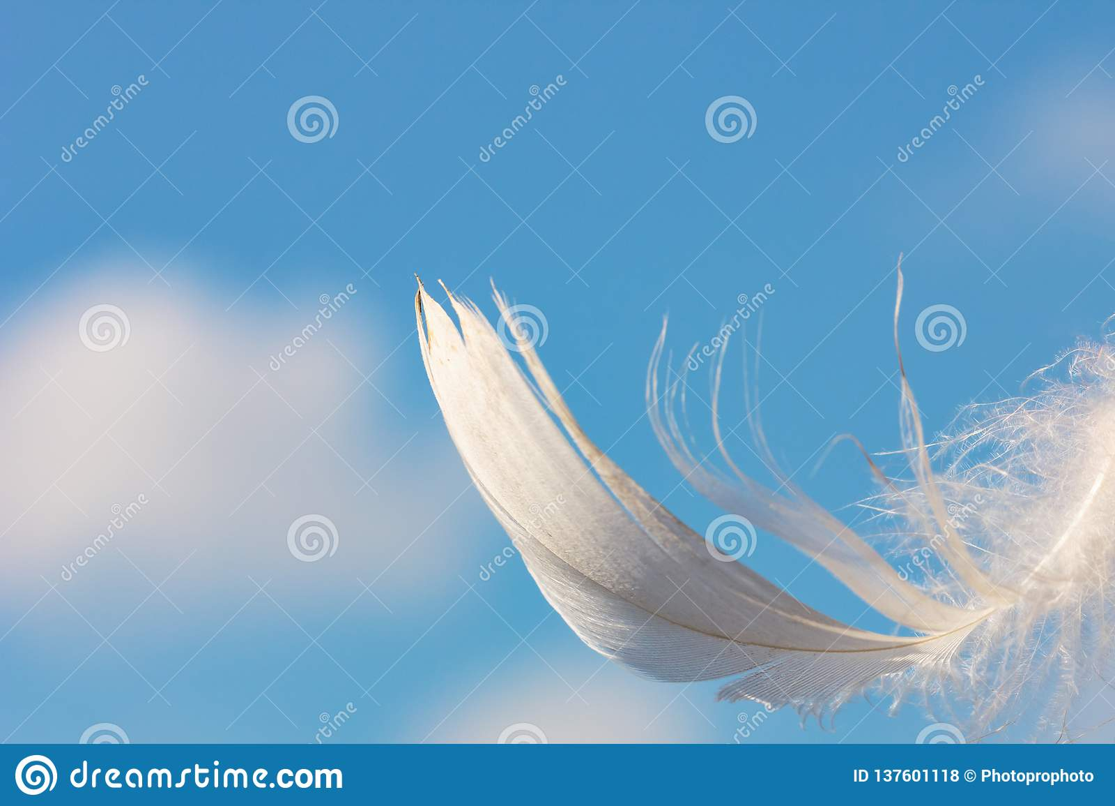 Sneeuwwitte veer op blauwe hemelachtergrond met wolken, lichtheidsconcept
