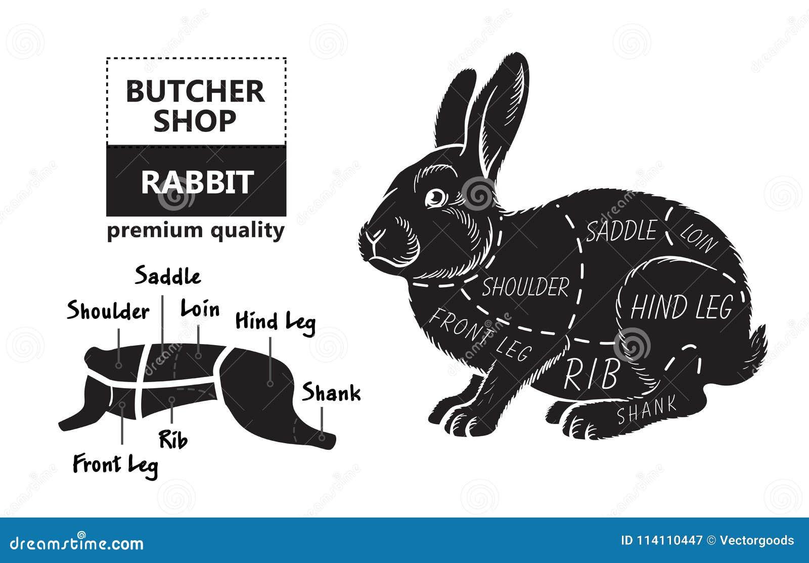 Snitt av kanin Affischslaktarediagrammet för livsmedel, köttdiversehandel, slaktare shoppar, bondemarknaden Kaninkontur vektor