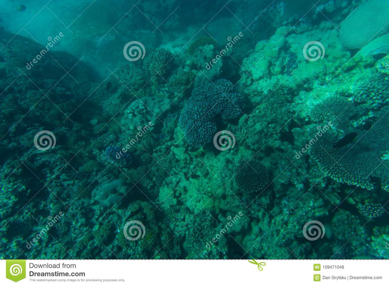 Snorcheling on a beautiful colorful coral reef in sea. Summer vocation.